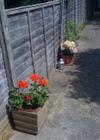 Flower_pots_2