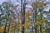 Autmun_trees_3